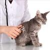 Ветеринарные клиники в Тучково